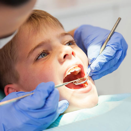orthodontist with mouth model